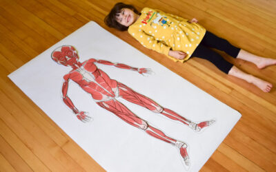 Life-Size Printable Muscular System for Kids